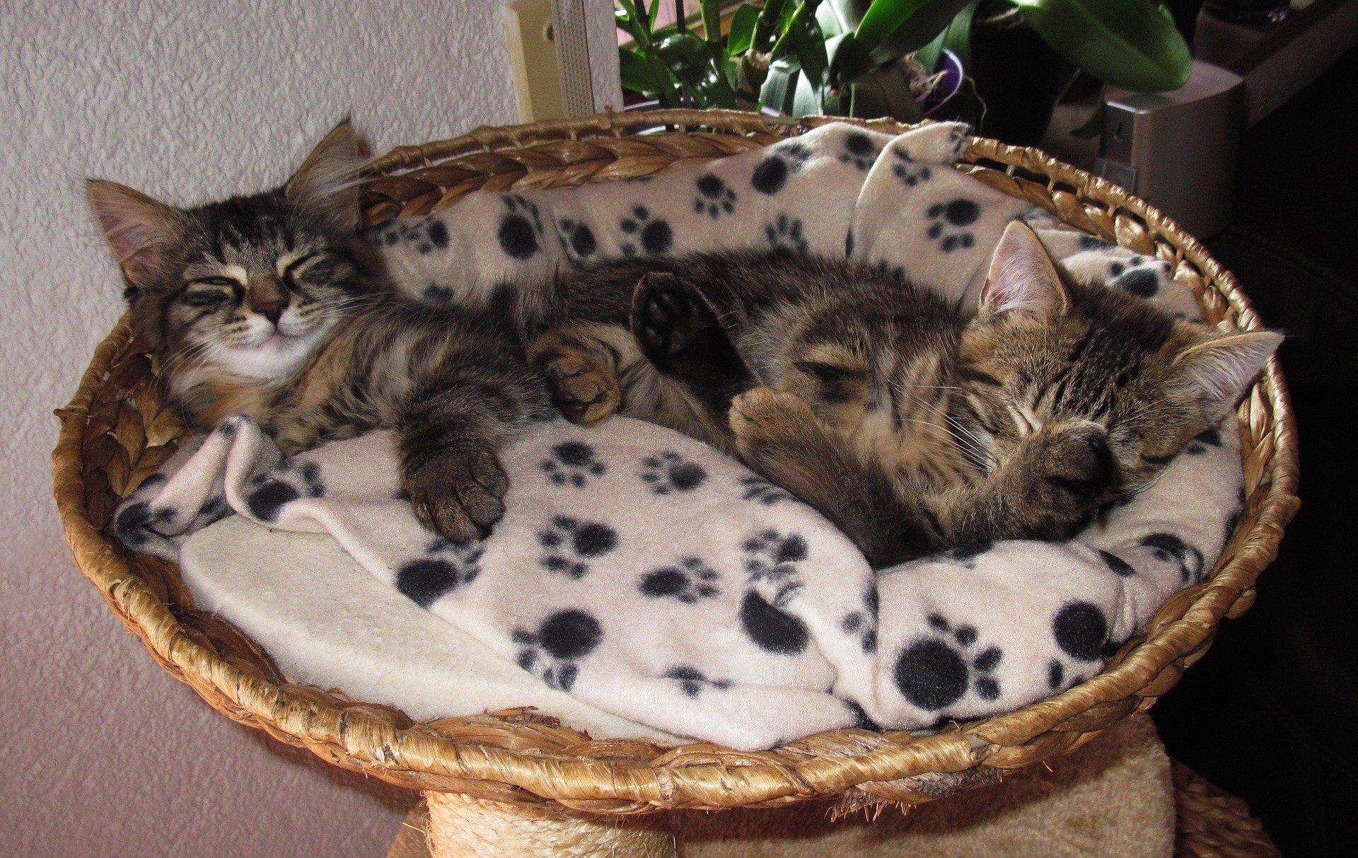 Cucce per gatti da esterno come devono essere dogalize for Cucce per gatti da esterno coibentate