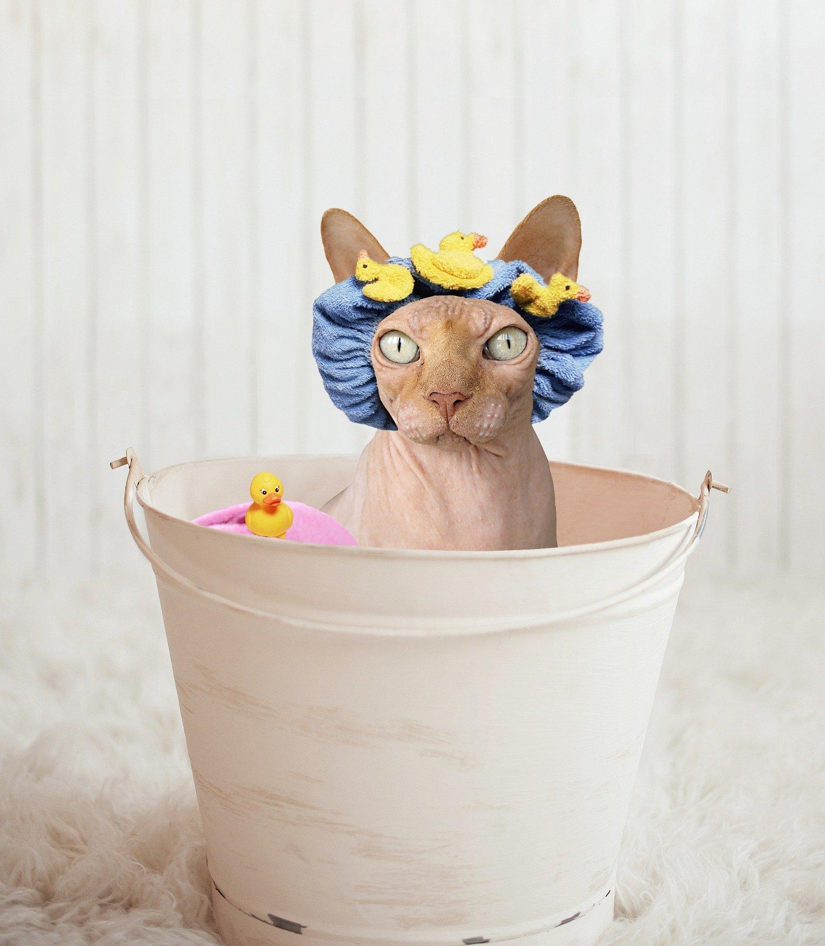 Toelettatura gatti: quando e come fare il bagno