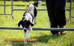 Giochi per cani: sono tornati i SuperGiochi, le olimpiadi per cani dei nostri amici di MyPetsHero!