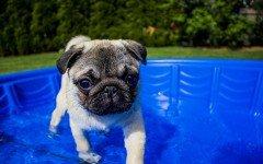 Piscine per cani: quali sono le caratteristiche ideali