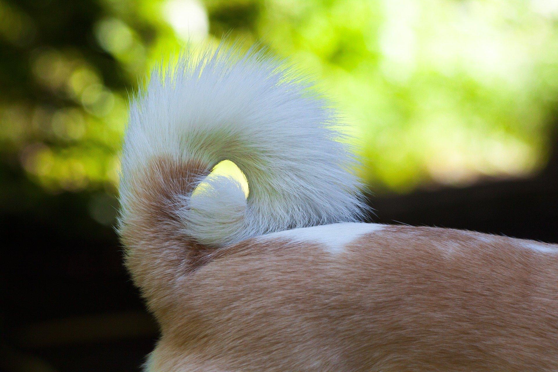 Cane che si morde la coda qual è la spiegazione