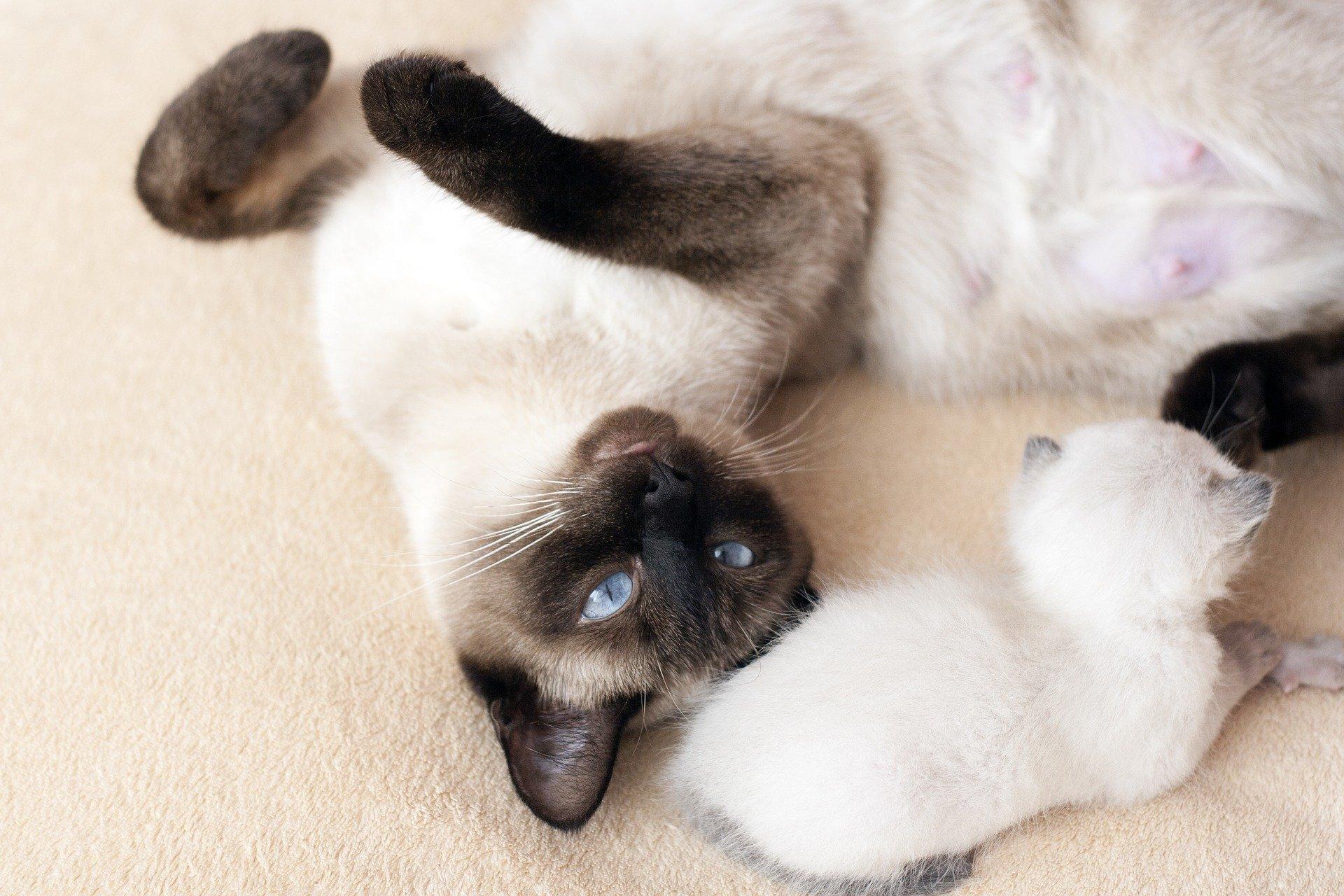 Gatti da adottare: dove rivolgersi se si desidera un felino