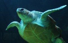 Tartaruga d'acqua: tutto ciò che devi sapere per la sua salute