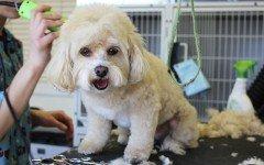 Tosatrice per cani: scopri quale scegliere