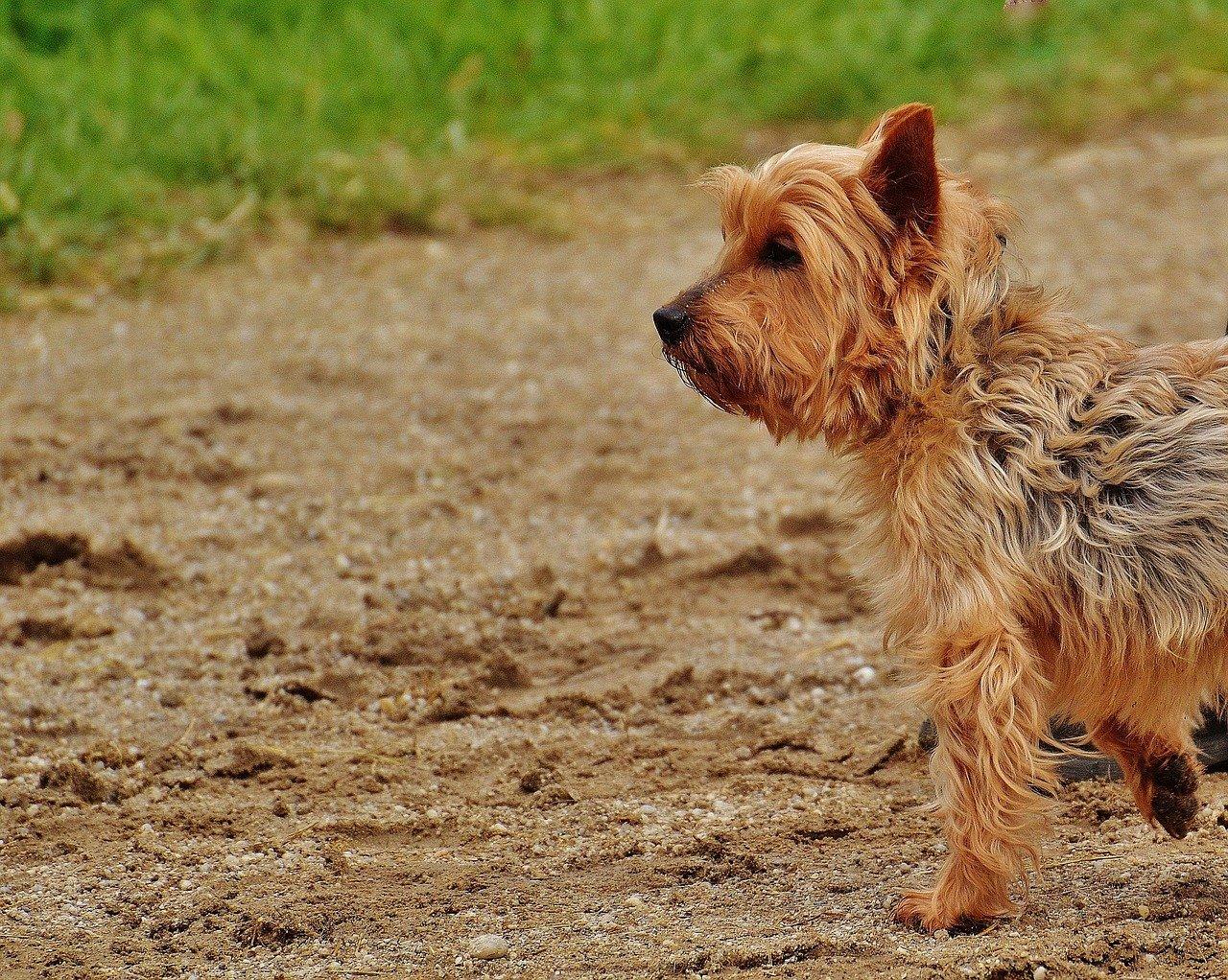 Come educare un cane a fare i bisogni fuori e nella lettiera dogalize - Educare il cane a non salire sul divano ...