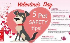 Pet love day: today is Valentine's day, so let's party! Celebrate with your beloved ones, both human and pet! Share your story here in Dogalize!
