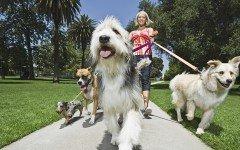 Cuidador de perros golpea y descuida de los animales