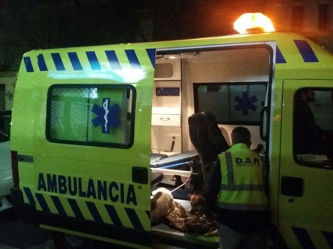 La primera ambulancia para perros y gatos
