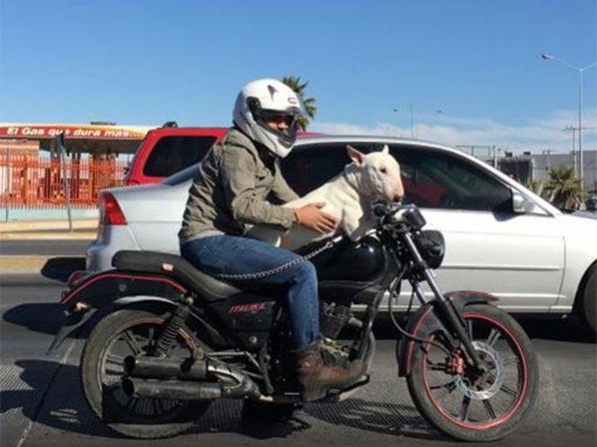 Un hombre de paseo con el perro en motocicleta