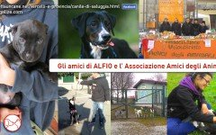 Aiutiamo Alfio, ospite dell' Associazione Amici degli Animali