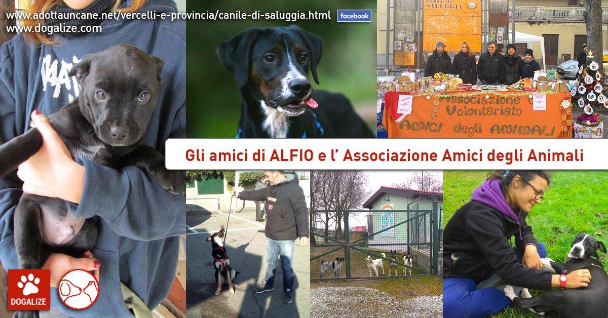 Aiutiamo Alfio, ospite dell' Associazione Amici degli Animali