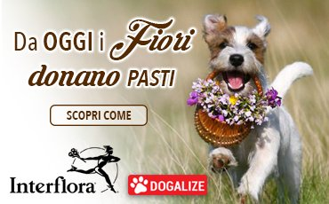 dogalize interflora