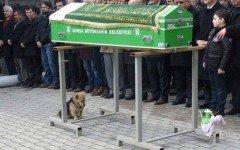 Noticias de perros: el perro Cesur