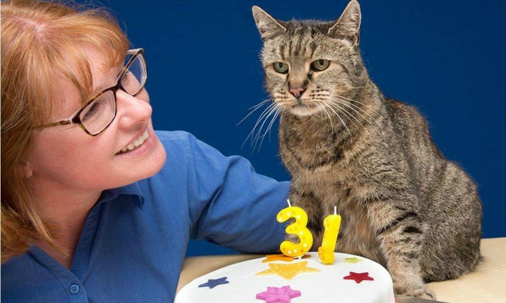 Gatto più vecchio del mondo: Nutmeg ha compiuto 31 anni