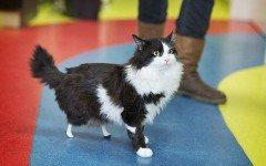 La storia di Pooh, il gatto con le zampe bioniche