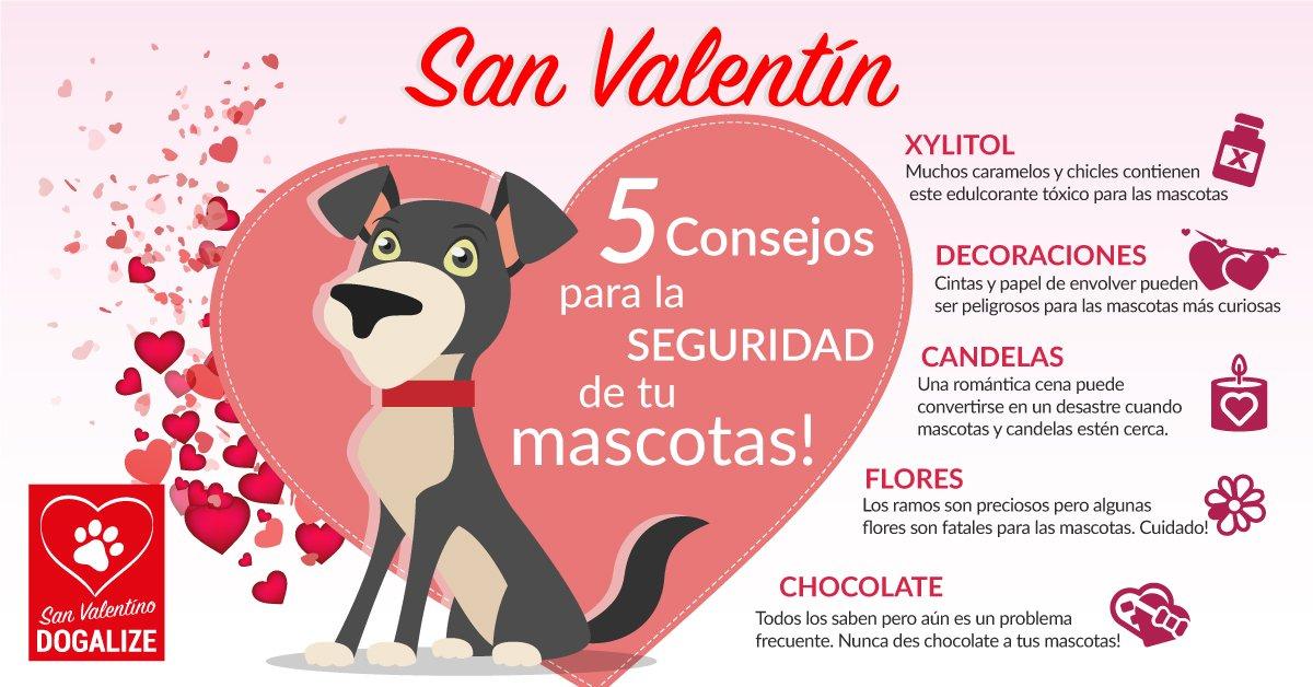 Un San Valentin especial con los consejos Dogalize!