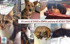 Aiutiamo Sissi, ospite dell' Associazione Enpa di Acqui Terme