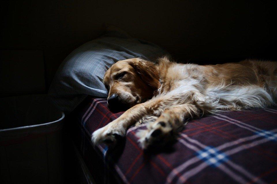 Perro duerme en cama
