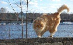 Comportamiento de los gatos: entender nuestro amigo felino