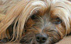 Dog disease: Cancer in dogs Symptoms and Treatment