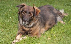 Dod disease: Epilepsy in Dogs, Symptoms, and Treatment