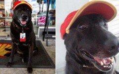 Perro abandonado en una gasolinera encuentra trabajo