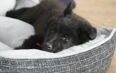 Dog beds: Choosing the Best Dog bed for your Pet