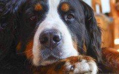 Quanto costa sterilizzare un cane e cosa significa