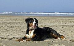 Spiagge per cani Liguria: le più conosciute