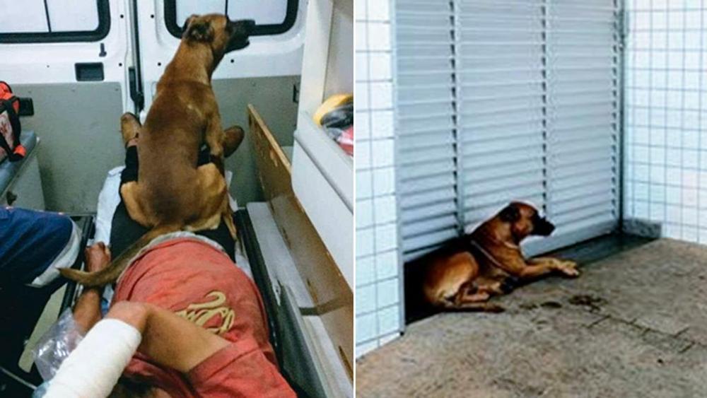 Cane accompagna il padrone in ospedale e lo aspetta fuori