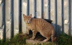 Vermi gatto: i parassiti intestinali dei nostri felini