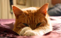 Gatti arancioni tutte le caratteristiche e le qualità
