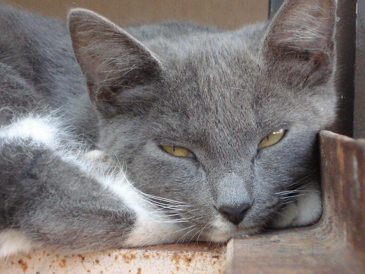 Killer dei gatti a Bergamo: chiesti 16 mesi di carcere