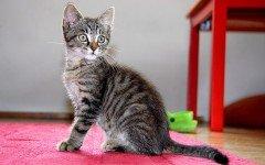 Anatomia del gato: como esta hecho un gato sistema respiratorio
