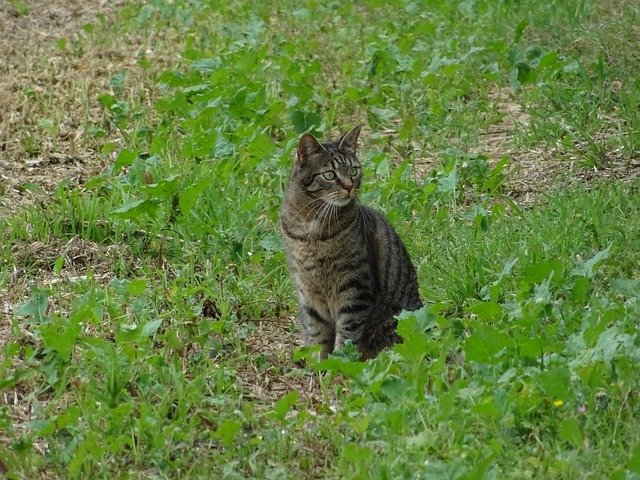 Zecche gatto, cosa sono e come infettano l'animale