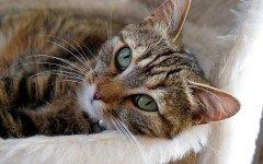 Allergia ai gatti: i sintomi e come riconoscerla