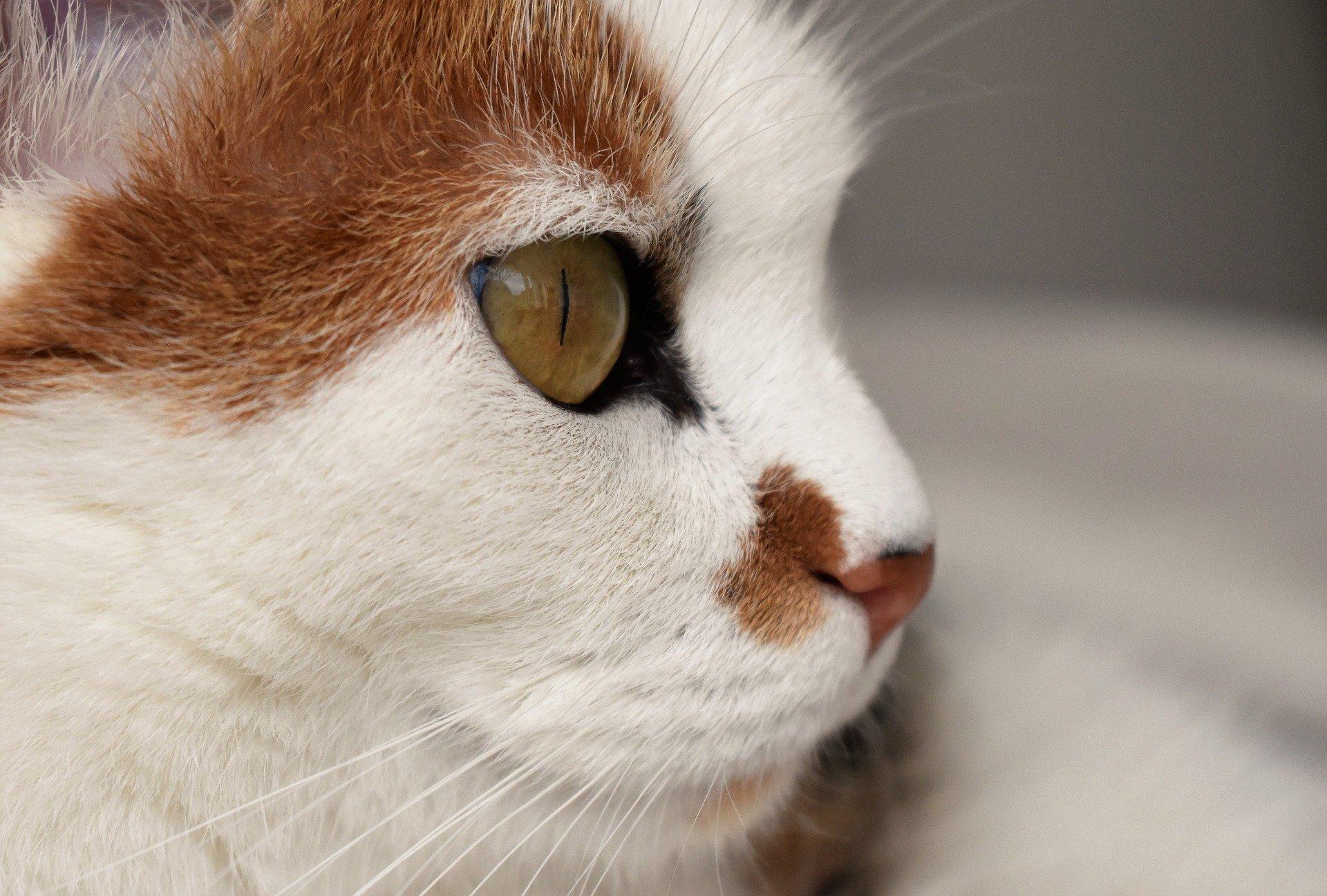 Gatto con raffreddore: come curarlo, cause e sintomi