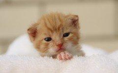 Edad de los gatos, ¿cuántos años pueden vivir?