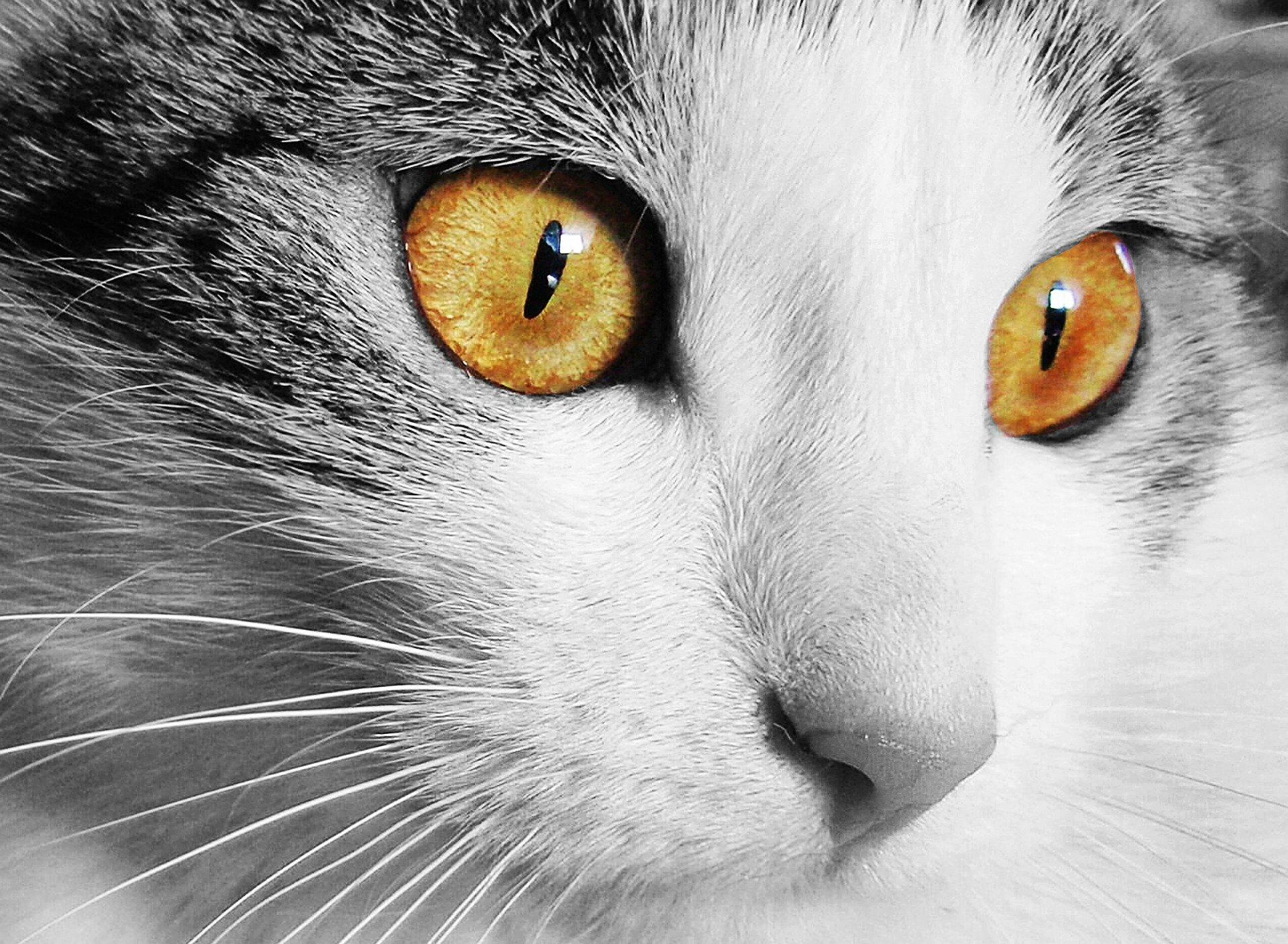 Cat disease: the most common Cat Diseases