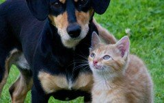 Mutua per cani e gatti: scopriamo l'iniziativa