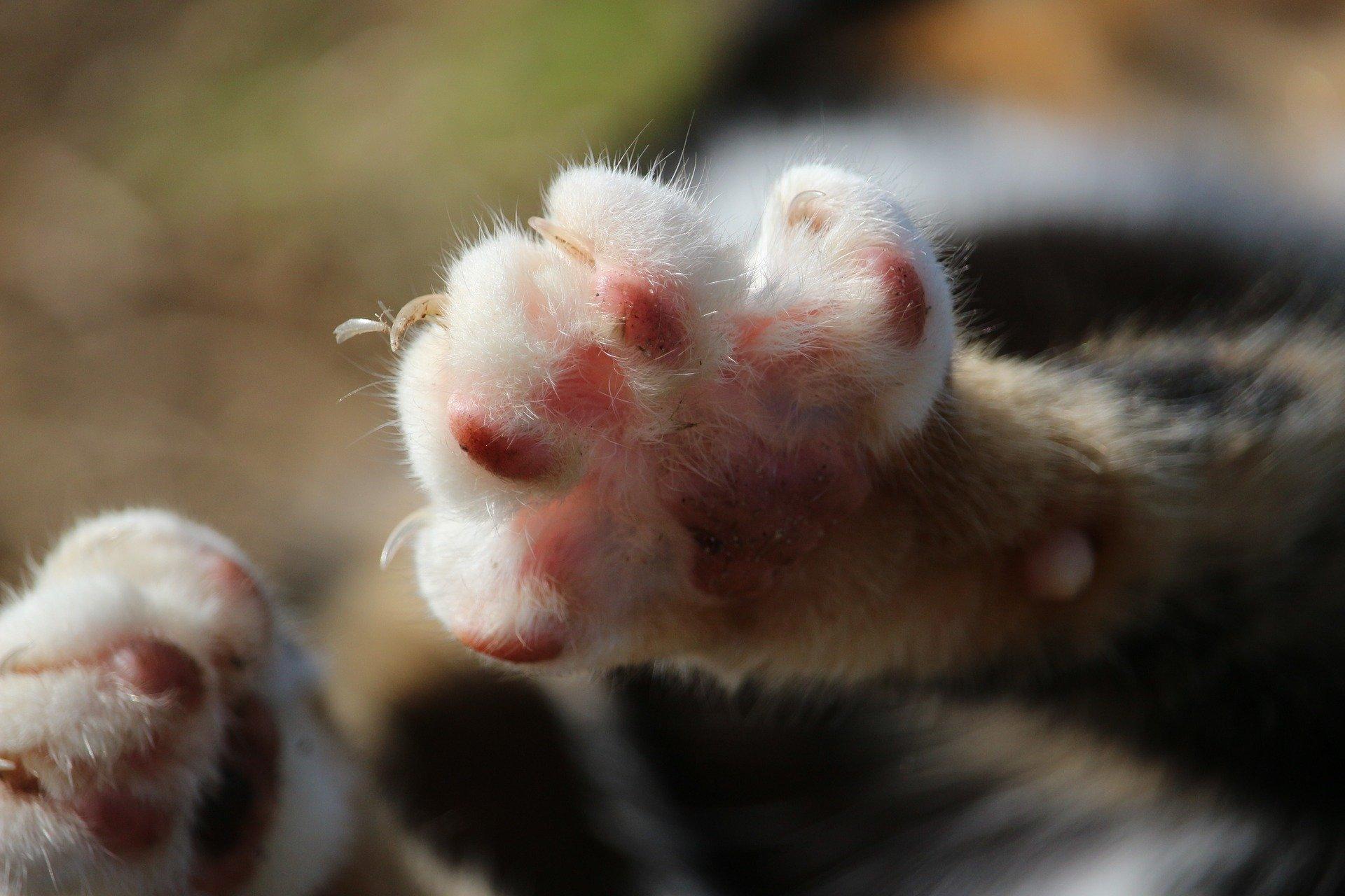 Tagliare le unghie al gatto, ecco come fare