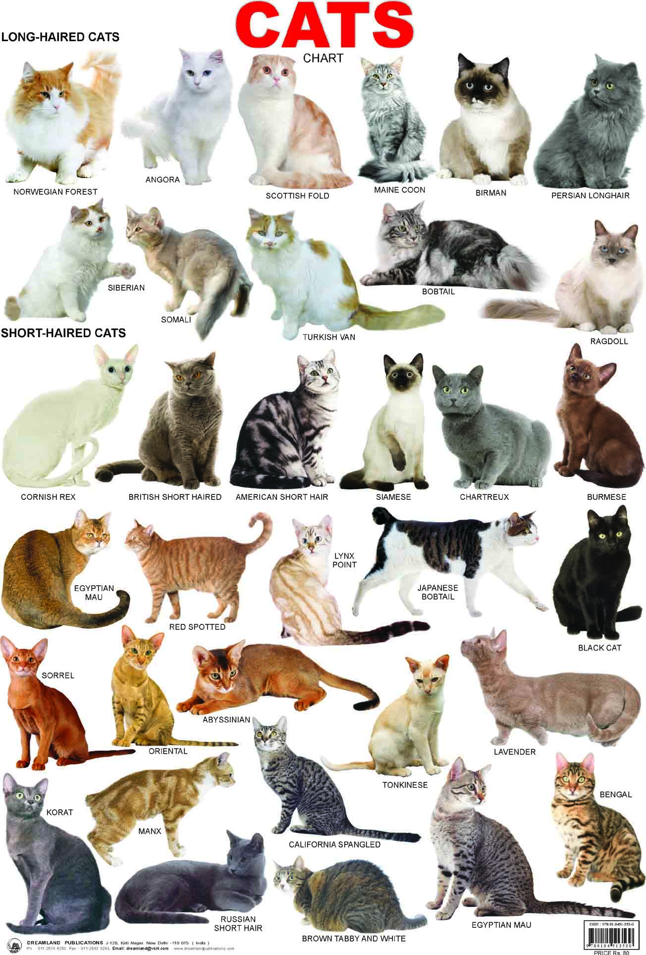Cat breeds: information, characteristics and behavior