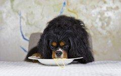 Pasta per cani: cos'è e quali sono i suoi vantaggi