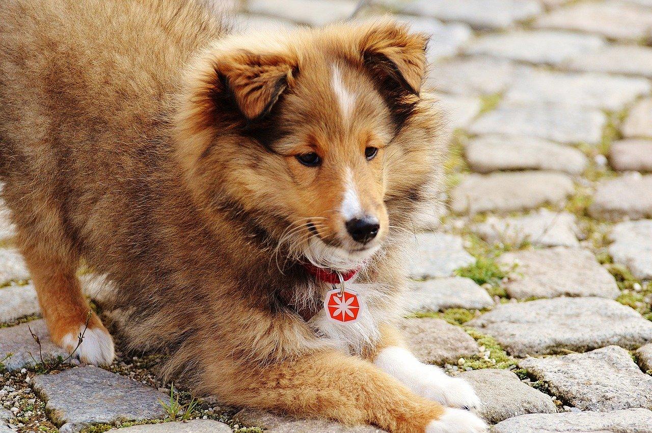 Accessori per cani: gli oggetti indispensabili da avere