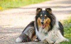 Perché comprare e come compilare una medaglietta per cani