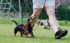 Dog Training is very Important for your Pet: Let's see why