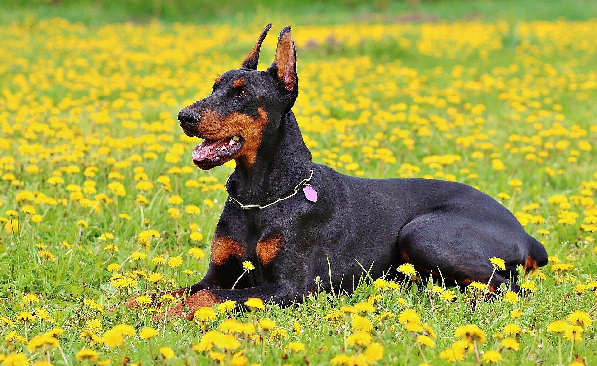 Cani: razze pericolose o padroni sbagliati?