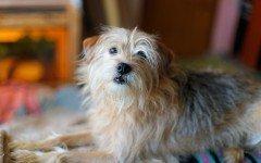 Sterilizzazione dei cani, perchè farla e i vantaggi
