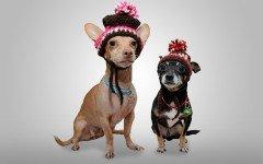 Le foto cani divertenti le più belle sul web