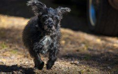 Ultrasuoni per cani: a cosa servono e come funzionano
